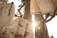 Deer antlers hanging in a tree. Harvested deer antlers hanging in a tree after being harvested. Sunlight shining through the beams royalty free stock images
