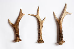 Deer antlers Royalty Free Stock Photos