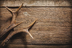 Deer Antlers on Wooden Surface. High Angle View of Deer Antlers Against Rustic Wooden Background with Copy Space stock photos