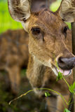 Deer are asking humans to conserve nature. Royalty Free Stock Images