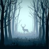 Deer in autumn misty forest background Stock Photography