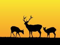 Deer background Stock Image