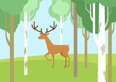 Deer in the bichwood forest flat cartoon vector wild animal. Deer in the birchwood forest flat design cartoon vector wild animals. Flat zoo nature children Stock Photography