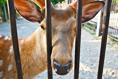 Deer in a cage Stock Photos