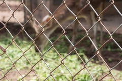 Deer in cage Royalty Free Stock Photography