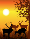 Deer card. Background illustration of wild deer in forest Royalty Free Stock Photos