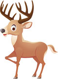 Deer cartoon Royalty Free Stock Images