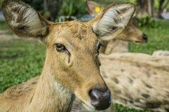 Deer Cervidae laydown concept Stock Photo