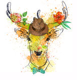 Deer character colorful portrait Stock Photography