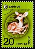 Deer, circa 1974 Stock Photo