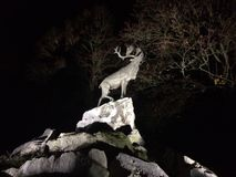 Deer on cliffs at night Royalty Free Stock Image