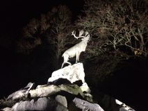 Deer on cliffs at night Royalty Free Stock Photos