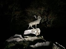 Deer on cliffs at night Stock Images