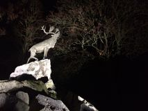 Deer on cliffs at night Stock Image