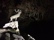 Deer on cliffs at night Royalty Free Stock Photography
