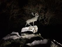 Deer on cliffs at night Royalty Free Stock Photo
