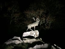 Deer on cliffs at night Royalty Free Stock Images