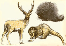 Deer, Coati and Porcupine. Collection of three animals - Deer, Coati and Porcupine. / Vector description: Editable in three layers. Number of colors in each Stock Photography