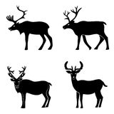 Deer collection Stock Images