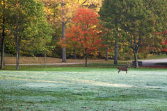 Deer in colorful park Stock Images