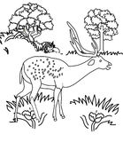 Deer coloring page Stock Photos