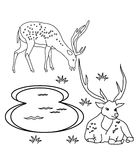 Deer coloring page Royalty Free Stock Photos