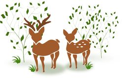 Deer couple between trees Stock Photo