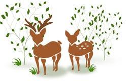 Deer couple between trees Stock Photo