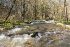 Deer Creek na mola Imagens de Stock
