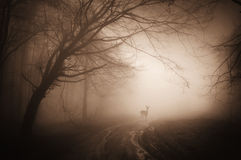 Deer in a creepy dark forest with fog Stock Images
