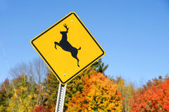 Deer crossing sign in front of autumn forest Royalty Free Stock Photos