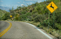Deer crossing warning sign on street in arizona Royalty Free Stock Image