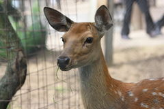 Deer. Cute litle deer in the zoo stock photos