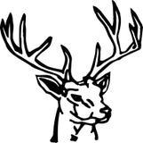 Deer Royalty Free Stock Photos