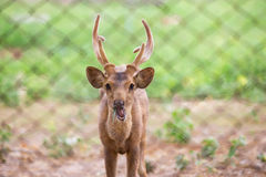 Deer. Cute deer in zoo Stock Images