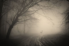 Deer in a dark forest with fog Stock Image