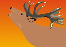 Deer on a decline. A wild deer. The marriage period vector illustration