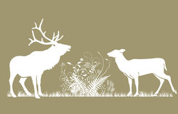 Deer and doe Royalty Free Stock Photography
