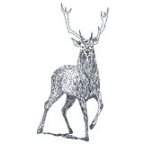 Deer drawing Stock Images