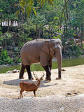 Deer and elephant Stock Images