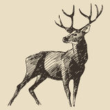 Deer Engraving, Vintage Illustration, Vector Royalty Free Stock Photo