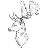 Deer Face Side Sketch Stock Photos