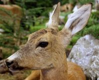 Deer fallow deer wild animals of the forest. In the middle of the Woods stock image