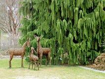 Deer Family Royalty Free Stock Photos