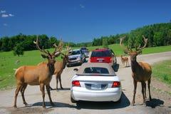 Deer family in Omega park Stock Photos