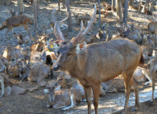 Deer on the farm Stock Image