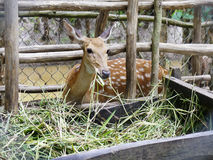 Deer farm Stock Image
