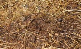 Deer feces. Detail deer feces in farm Royalty Free Stock Images