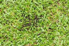 Deer feces. On the grass Stock Photo