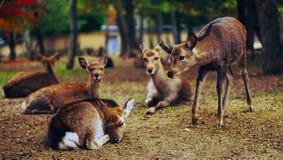 Deer on Field Stock Photo